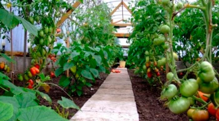 садоводство как бизнес